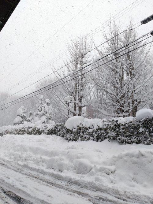 17年ぶりの金沢大雪でございます。