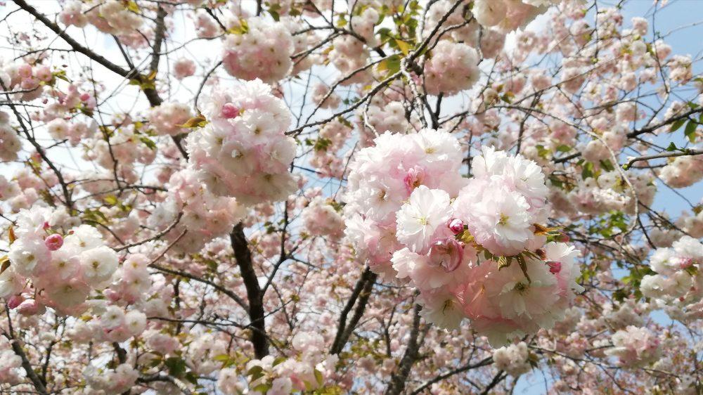 5月の営業日・休業日のお知らせ